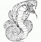 Snake Coloring Cobra King Rattlesnake Royalty Venomous Drawing Rooms Head Modern Ninjago Printable Atstockillustration Draw Getdrawings Danger Clipart Chainimage Popular sketch template