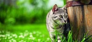 Flöhe Bei Katzen Bekämpfen : vorbeugung und beseitigung von zecken und fl he bei katzen gartenmarkt der lhg s dtirol ~ Orissabook.com Haus und Dekorationen