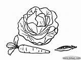Cabbage Colorear Coloring Repollo Col Pagina sketch template