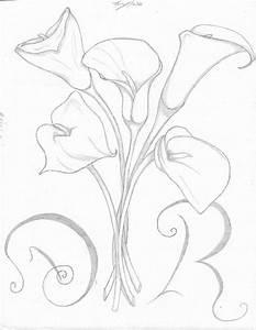 Calla Lily Drawing | Calla Lily Pencil Sketch Drawing ...