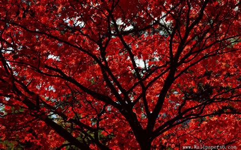 red aesthetic landscape wallpapers wallpaper cave