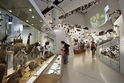 Museum Victoria Melbourne Museums Wild Australian Exhibition