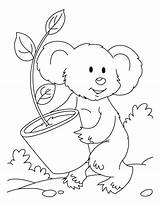 Koala Bear Coloring Pages Printable Plant Eucalyptis Sloth Templates Getcoloringpages Draw Popular Comments Template sketch template