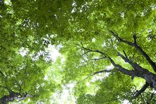Free picture: green leaves, dark green, forest, sky, trees, leaves