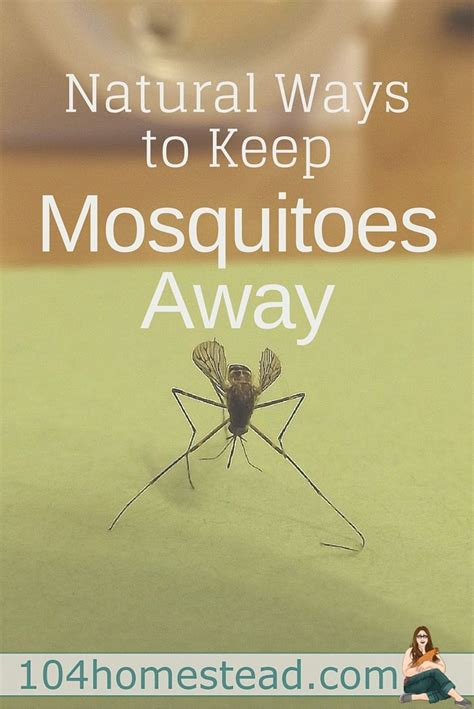 what can i use to keep mosquitoes away 432 best best of the 104 homestead images on pinterest crockpot hobby farms and homestead