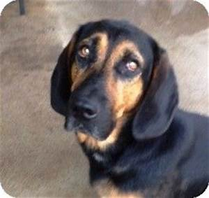 Best 195 Bloodhound Mixed images on Pinterest | Bloodhound ...