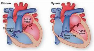 How The Heart Pumps  Diastole And Systole By Texas Heart