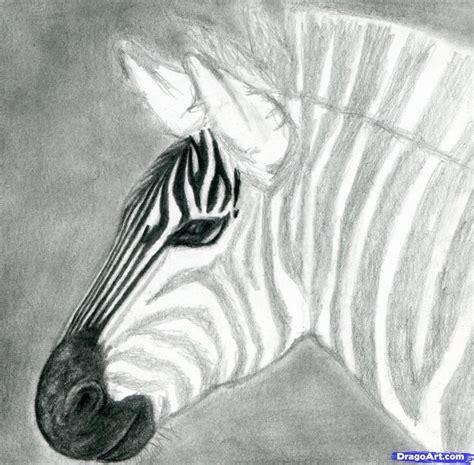 draw  zebra draw  realistic zebra step  step