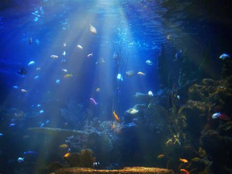 deep sea sponge fights pancreatic cancer easy