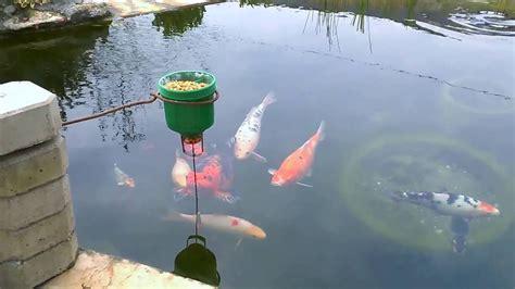 on demand diy cheap koi fish feeder