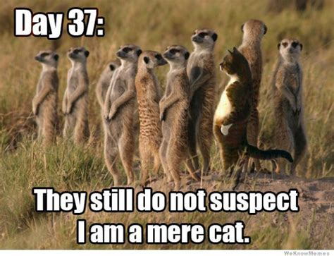 Mere Cat Meme - day 37 mere cat meme collection