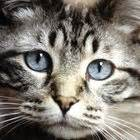 do cats shed their whiskers broken kitten whiskers pets
