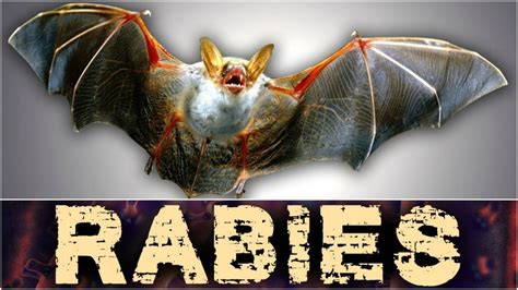 bats test positive  rabies  utah kutv