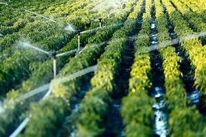 Objectives Of Company Optimizing Water For Agriculture In Saudi Arabia Kapsarc