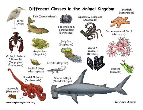 classification  animals animal classes