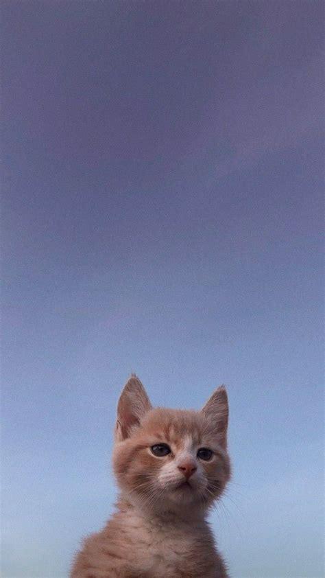 pin oleh ryuske di i like di 2020 kucing cantik hewan