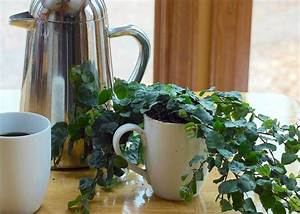 using coffee grounds in the garden hgtv