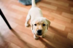 best dog breeds apartments