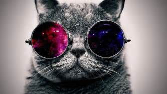 cool cat cool cat with glasses wallpaper
