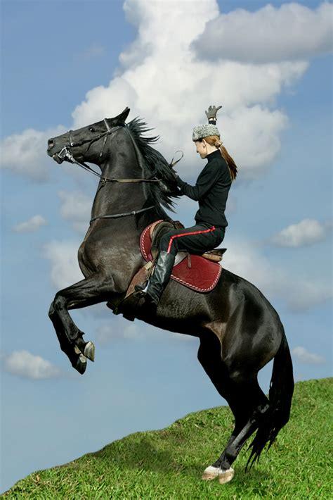 horses horse animals myths nature myth conclusion smart
