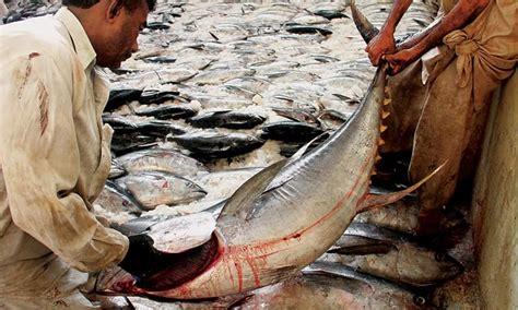 fish exporters worry  slump  global prices bites