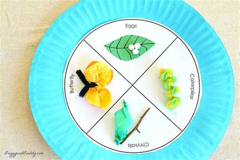 paper plate project idea butterfly life cycle