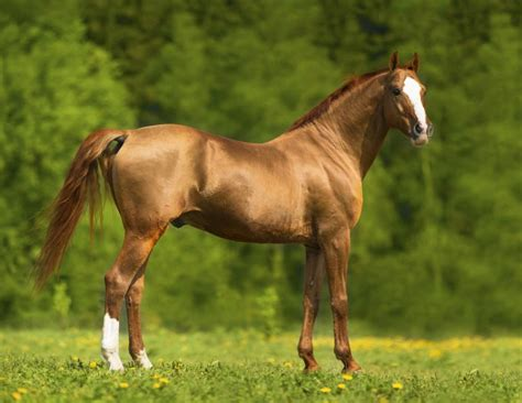 horse healthy myth shiny