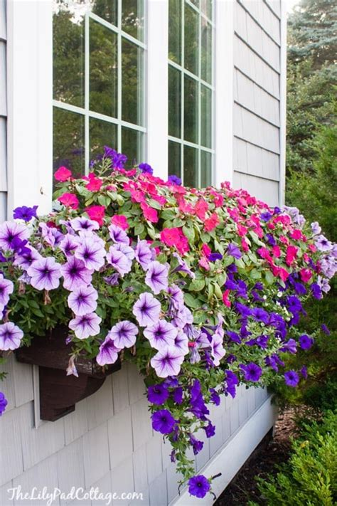 window box tips   black thumb  lilypad cottage