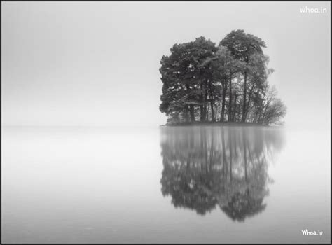 Wallpaper Hd Black And White by Black And White Tree Hd Wallpaper For Desktop Free
