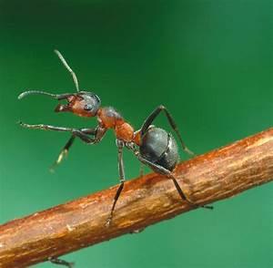 Wie Bekämpfe Ich Ameisen : biologie ameisen orientieren sich an optischen landmarken ~ Articles-book.com Haus und Dekorationen