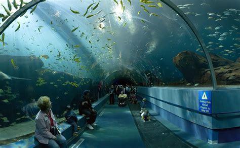 sea sydney aquarium top 10 attractions in sydney australia guidester