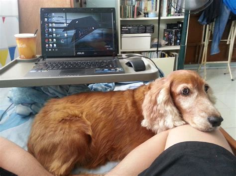 My Adopted  Ee  Dog Ee   Girl Girl Theer Spaniel Ft Www