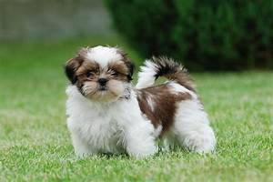 List Cutest Dog Breeds In The World With Picture. Do You ...