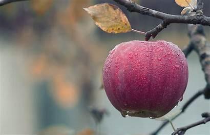 Nature Wallpapers Apple Water Drop