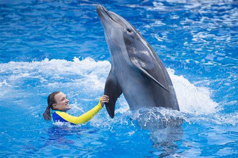 Dolphin Days Premier Kicks Off Wonder-Filled Weekend At ...