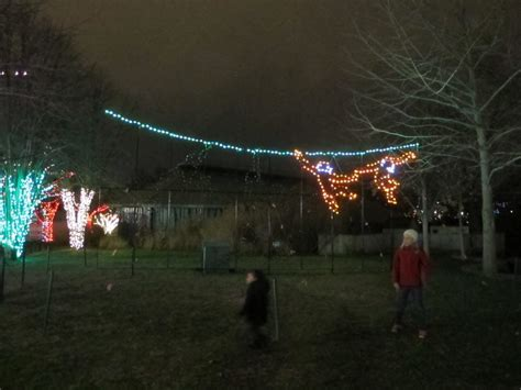 saint louis zoo christmas lights wild lights at the zoo