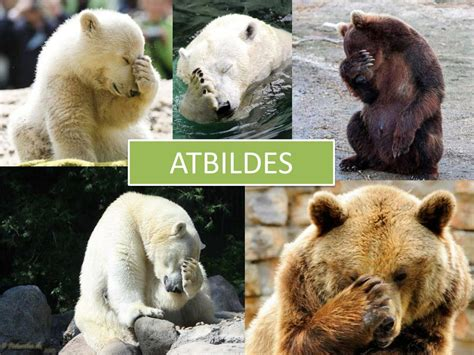 PPT - Dzeltenā kārta Zooloģija un dzīvnieku ekoloģija ...