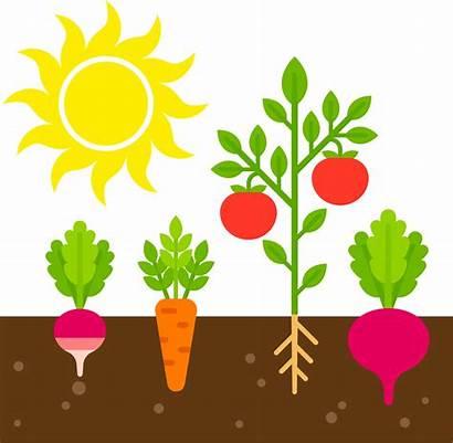 Garden Sun Gardening Plants Grow Need Place