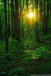 Nature Photography, Sun Light in Forest, Fine Art Print ...
