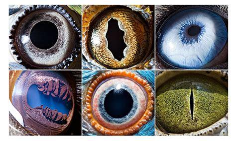 eyeballed suren manvelyans eerie animal close ups