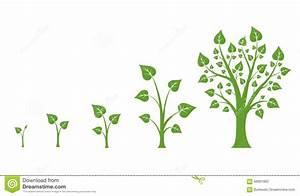 Tree Growth Vector Diagram Stock Vector