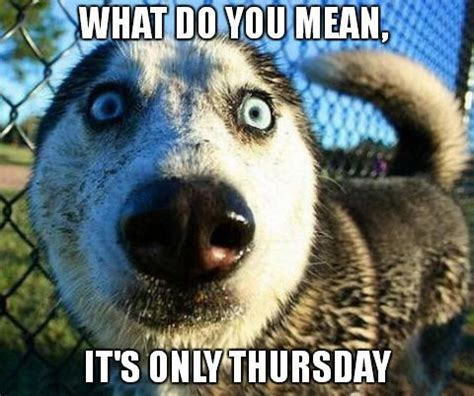 Thursday Memes 18 - what do you mean it s only thursday thursday pinterest thursday meme meme and memes