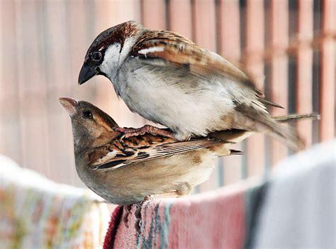 how do birds reproduce stone fruits finch beaks bird sex