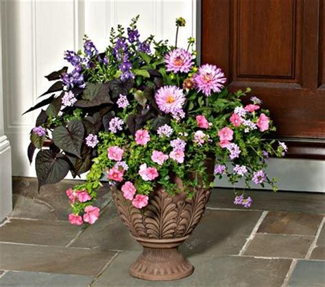 11 best annuals for containers images on