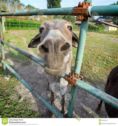 funny donkey stock photography image