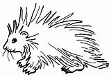 Porcupine Coloring Pages Print Coloringway sketch template