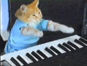 cat keyboard cat on computer keyboard gif