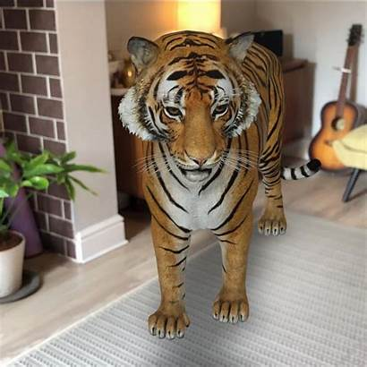 Tiger Animals Google Space Zoo Virtual Into