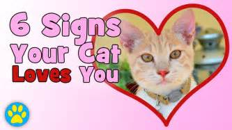 how to your cat 6 signs your cat you