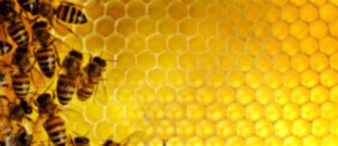 processing propolis part ii bee culture